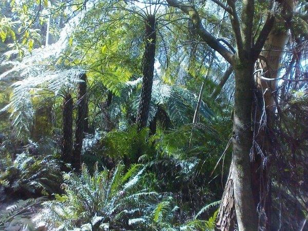2015 10 09 Reg Robyn  12a Tree ferns